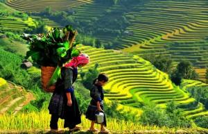 VIETNAM EXOTICO